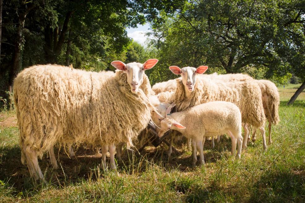 Schafskäserei Anderlbauer